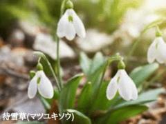 Shiseido Group 資生堂「おしゃれなひととき」〜季節からの贈り物〜2020冬・133号の収録